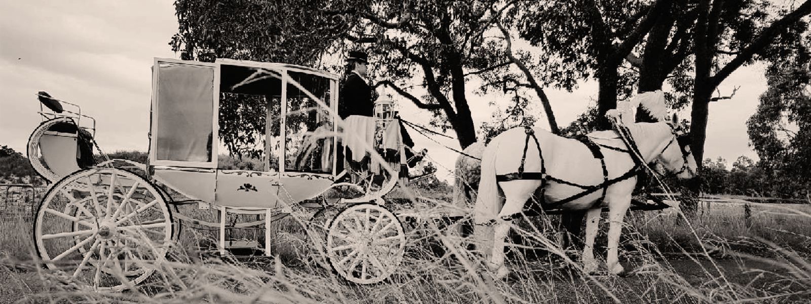 Perth-Horse-&-Carriage-Field