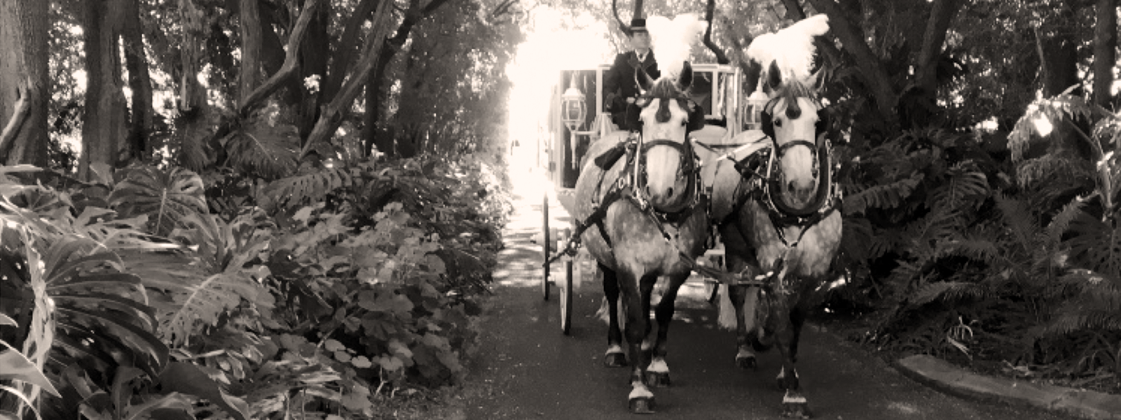 Perth-Horse-&-Carriage-Forrest