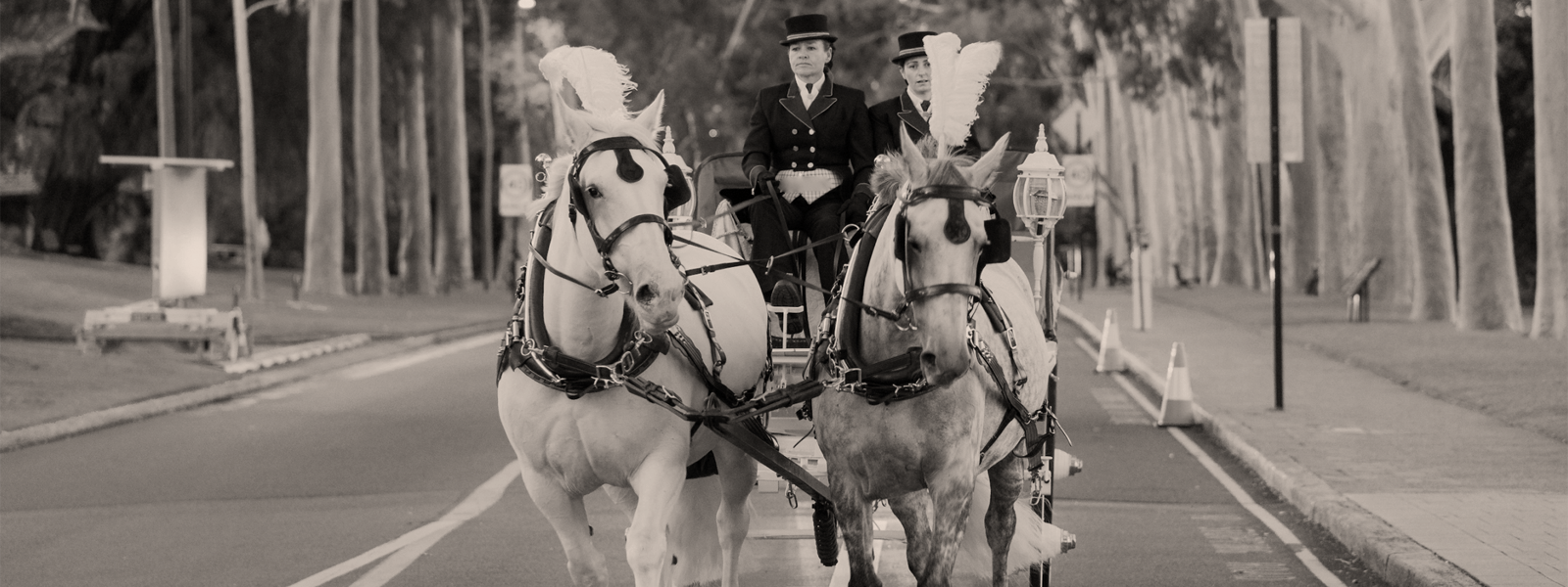 Perth-Horse-&-Carriage-Kingspark