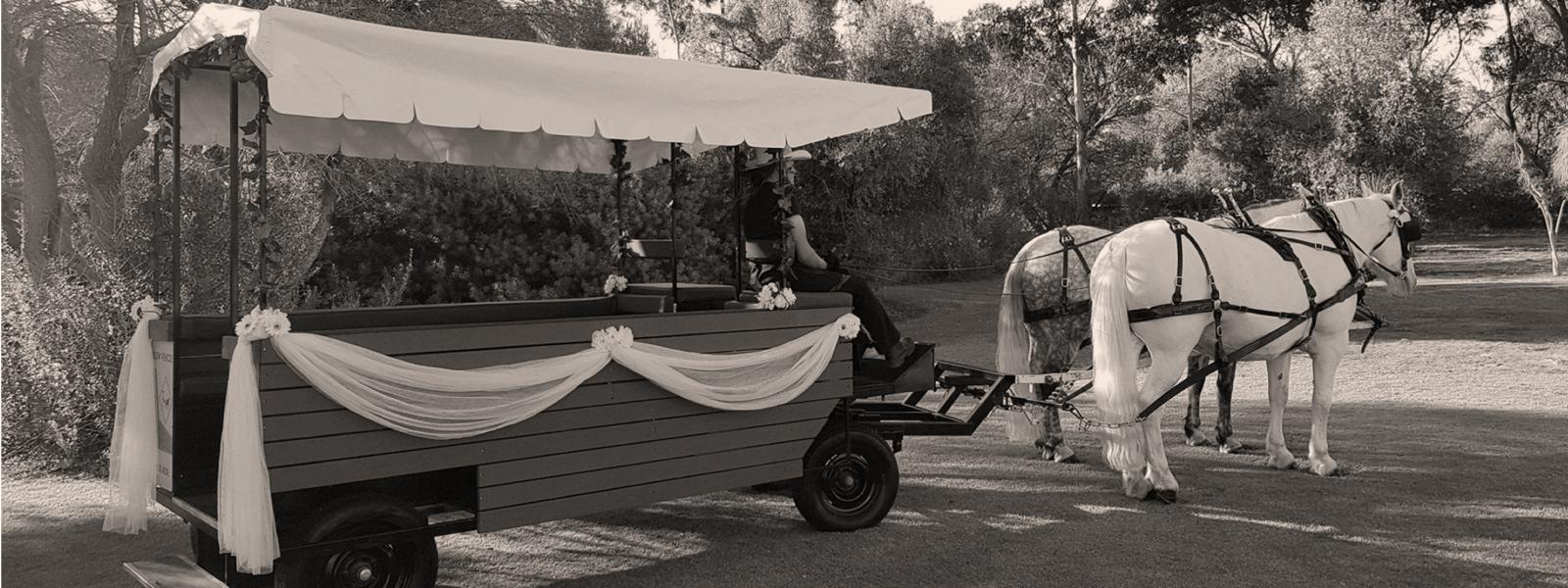 Perth-Horse-&-Carriage-Wagon